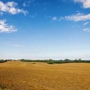 fertilizer salt index