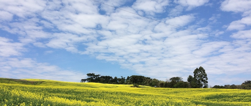 What to Consider When Desiccating Canola